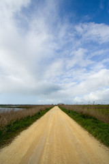 road through a summer landscape