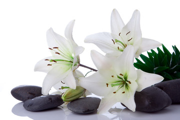 Wall Murals Water lilies madonna lily flower with stones on white