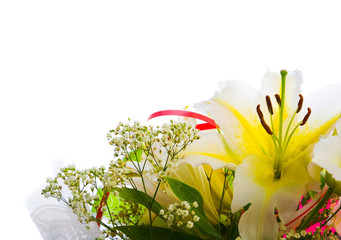 white lily on white background