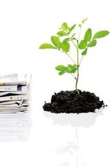 paper versus tree,recycling