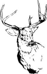 Deer / Reindeer Vector