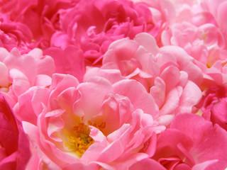 Poster de jardin Macro pink pastel rose