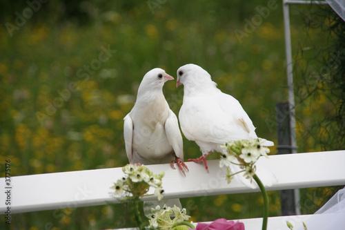 природа белые птицы ветка голуби  № 592640 бесплатно