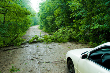car blocked by a fallen tree caused by a storm