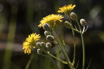 Buscar Fotos Flor Amarilla