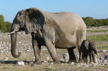 magnifique elephant