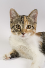 Fitzi- the cat
