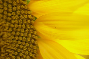 gros plan de fleur