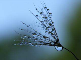 Fotorolgordijn Paardebloemen en water wet dandelion seed