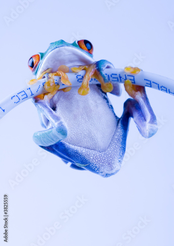 internet frog stock photo and royalty free images on fotolia com