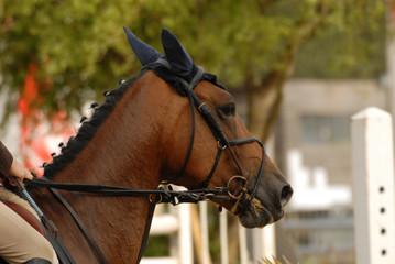 tête de cheval durant un parcours d'obstacles