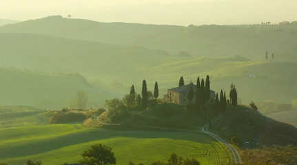 Stores photo Olive tuscan landscape