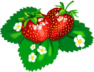 Two tasty appetizing strawberries