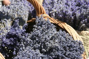 Fête et marché de la lavande en Provence