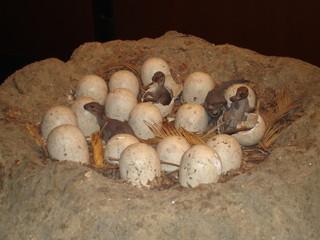 Dinosaur's nest