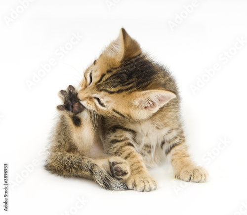 how to get rid of cat urine smell off shoes