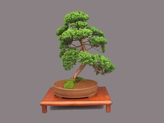 Bonsai Tree in a Bowl on a Wooden Plinth.