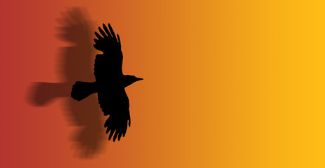 a hawk flying with open wings - silhouette - illustration