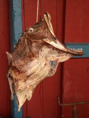 Profilo di rana pescatrice