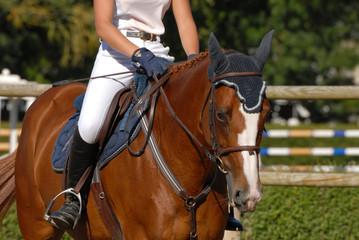 cheval et sa cavalière sur le paddock de CSO