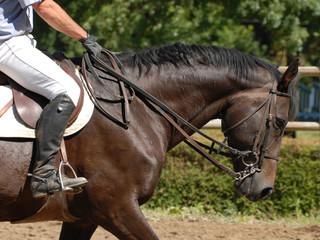 cheval de CSO sur le paddock