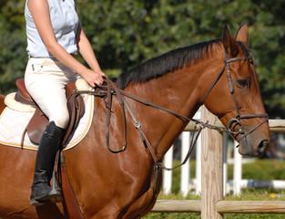 cheval sur le paddock