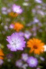 fleurs romantiques