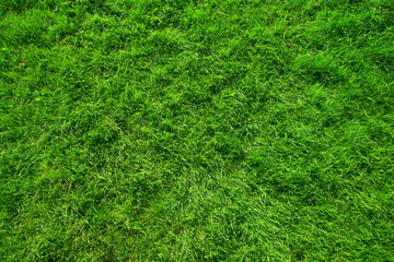 Green luscious grass background