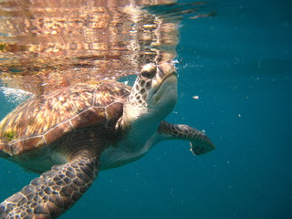 turtle surfacing for air