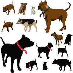 Many dogs (Vector illustrations and silhouettes)