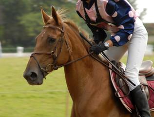 cheval et sa cavalière sur le cross