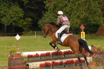 cheval et son cavalier sur un parcours de cross