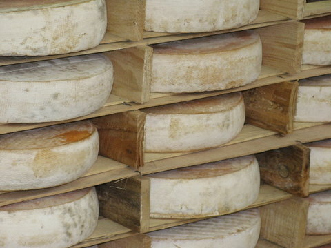 Saint-Nectaire cheese in Cantal, France