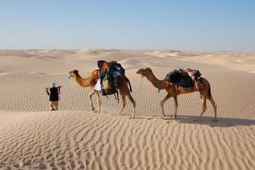 Poster Kameel camel caravan in desert Sahara