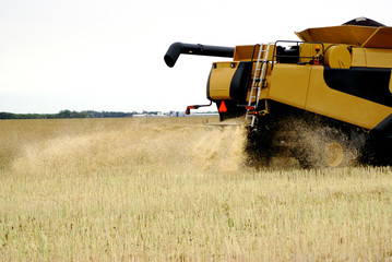 harvester with blowing wheat