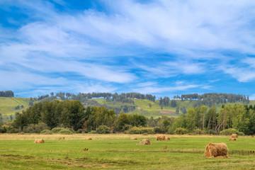 Summer, haymaking in Siberia