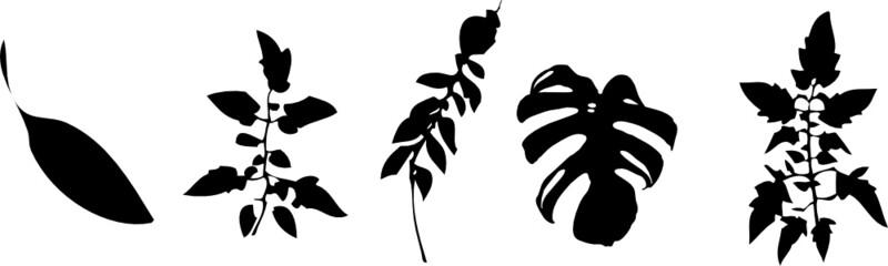 Blätter 4
