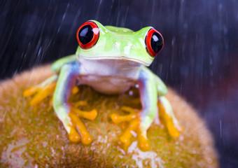 Frog & Kiwi