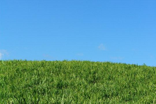 espace vierge : champs de canne et ciel bleu