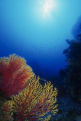 paesaggio subacqueo