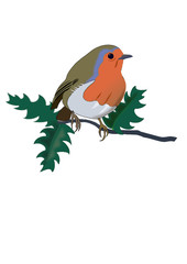 Robin in Holly