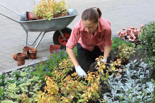 Белгород Морозовск подработка по высадка растений фото: Мама