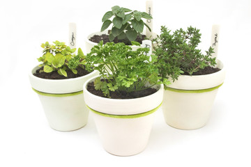 Fresh herb pots isolated