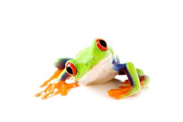 Foto auf Acrylglas Frosch frog is curious