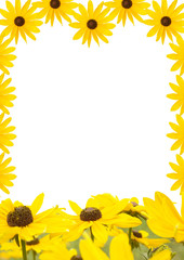 yellow flower background for you photo or text
