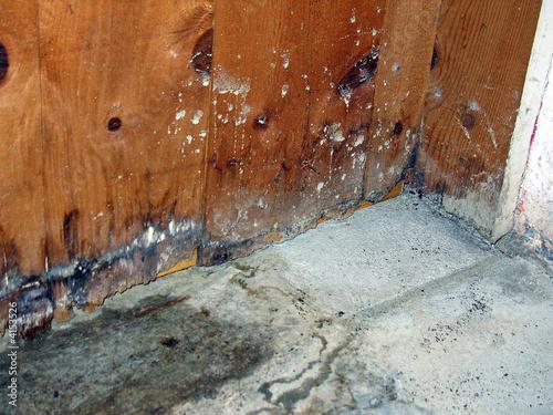 Как бороться с плесенью и грибком на стенах