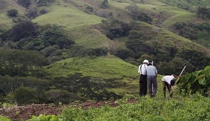 Bean Farmers on a Hillside.