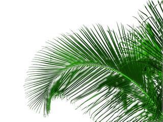 palme mentholée sur fond blanc