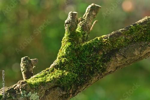branche arbre photo libre de droits sur la banque d 39 images image 4176719. Black Bedroom Furniture Sets. Home Design Ideas