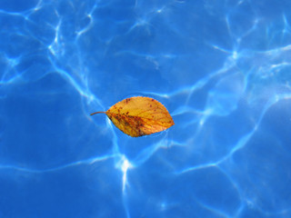 Yellow leaf on Blue water background
